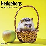 Hedgehogs Wall Calendar 2020